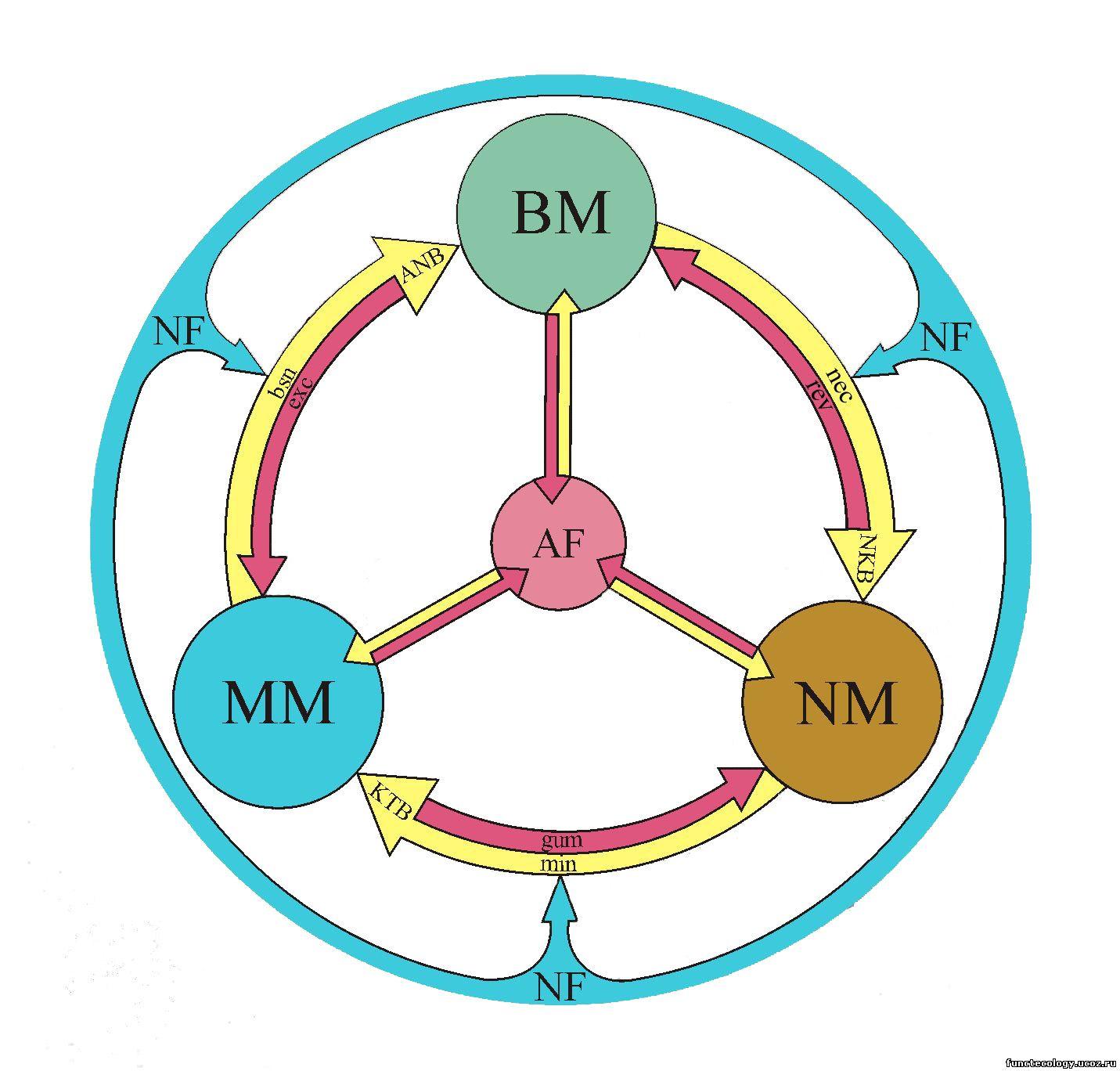 клетка- живая система схема